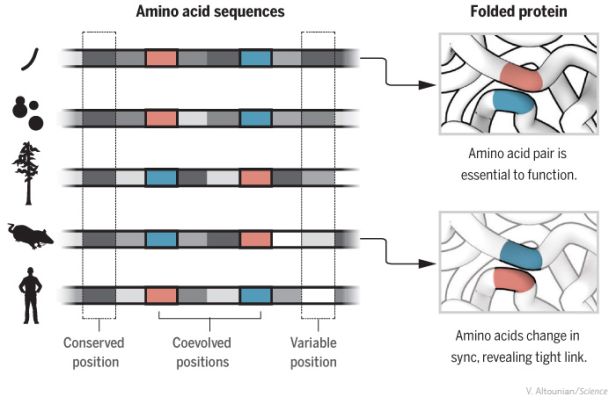 protein folding_sciencemag