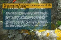 sjg-on-the-meaning-of-life-in-an-evolved-world2