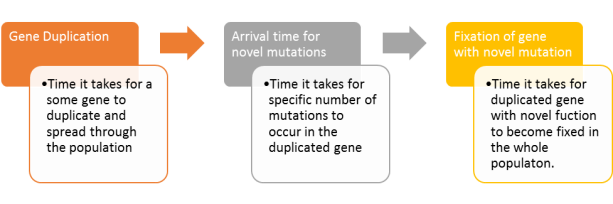 arrival-time-for-novel-gene-function