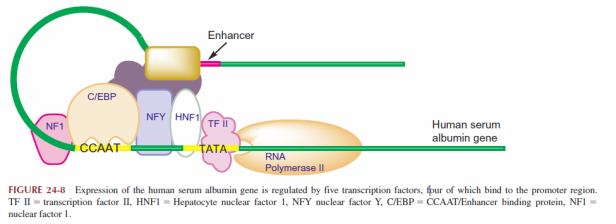 gene-with-promoter-example