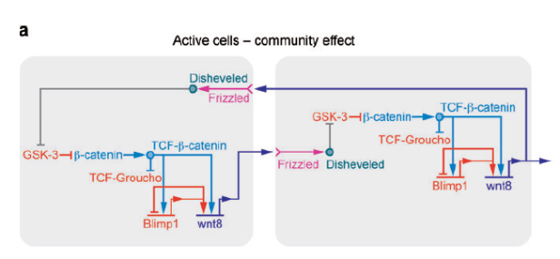 subcircuit-of-gene-network